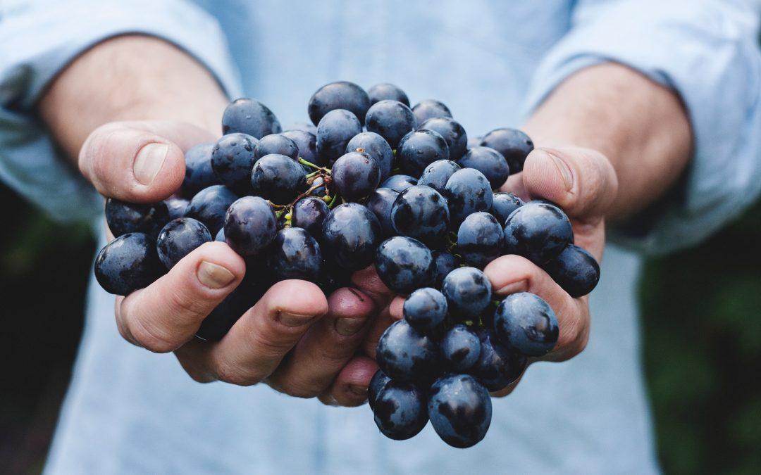 Pourquoi faire une cure de raisin + mon expérience